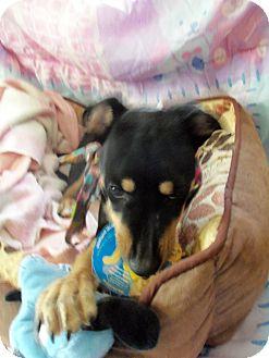 Terrier (Unknown Type, Medium) Mix Dog for adoption in Waldorf, Maryland - Tootie #340