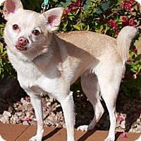 Adopt A Pet :: Egypt - Gilbert, AZ
