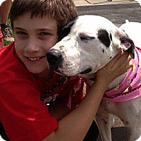 Adopt A Pet :: Brandy - Somers, CT