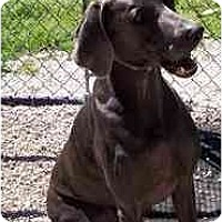 Adopt A Pet :: Isis  **ADOPTED** - Eustis, FL