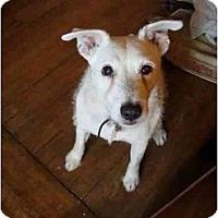 Adopt A Pet :: Trolley-calm - Toronto/Etobicoke/GTA, ON