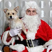 Adopt A Pet :: Max Pirouette - Shawnee Mission, KS