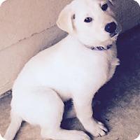 Adopt A Pet :: Cooper - Waterbury, CT