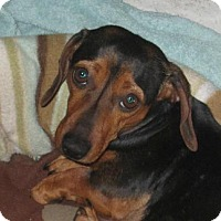 Adopt A Pet :: PETEE - Forest Ranch, CA