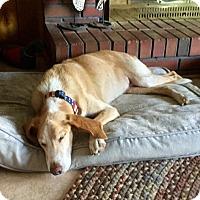 Adopt A Pet :: Simon - Virginia Beach, VA