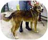 Husky Mix Dog for adoption in Coleraine, Minnesota - Cody
