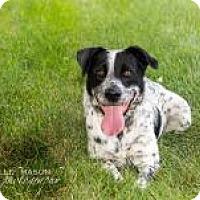 Adopt A Pet :: Legend - Naperville, IL