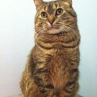 Adopt A Pet :: Momo - St. Paul, MN