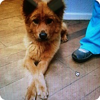 Adopt A Pet :: Annie - Mount Holly, NJ