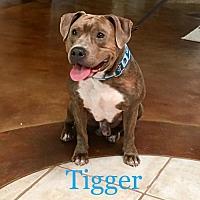 Adopt A Pet :: Tigger*F* - Sanford, FL