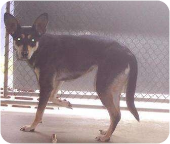 Terrier (Unknown Type, Small) Mix Dog for adoption in Mt. Vernon, Illinois - Princess