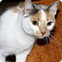 Adopt A Pet :: Chablis - Lombard, IL