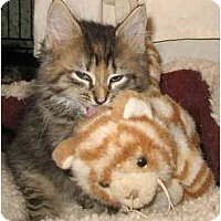 Adopt A Pet :: Phoebe - Cincinnati, OH