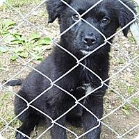 Adopt A Pet :: Opal - Bel Air, MD