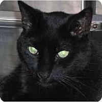 Adopt A Pet :: James Bond - Lombard, IL