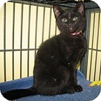 Adopt A Pet :: Carrie - Shelton, WA