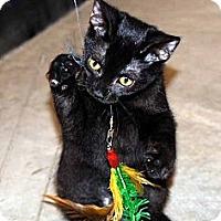 Adopt A Pet :: Starlight - New Port Richey, FL