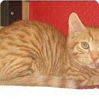 Adopt A Pet :: Casey - Jenkintown, PA
