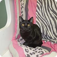 Adopt A Pet :: Miranda - Medina, OH