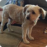 Adopt A Pet :: Daisy - Corona, CA