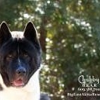 Adopt A Pet :: Chubby - Toms River, NJ