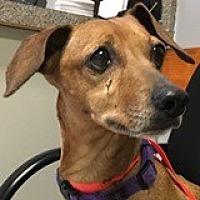 Adopt A Pet :: Paige Pomodoro - Houston, TX