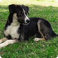 Adopt A Pet :: *Zeke - PENDING - Westport, CT