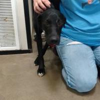 Adopt A Pet :: MARIAH - Graham, TX
