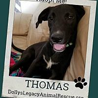 Adopt A Pet :: THOMAS - Lincoln, NE