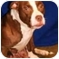 Photo 2 - American Pit Bull Terrier Mix Dog for adoption in Walker, Michigan - Sookie