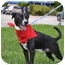 Photo 1 - Border Collie/Border Terrier Mix Dog for adoption in hollywood, Florida - hector