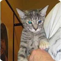 Adopt A Pet :: Sunshine - Jenkintown, PA