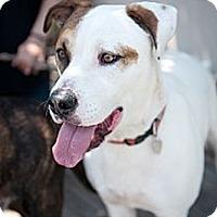 Adopt A Pet :: Cisco - Santa Monica, CA