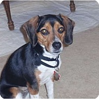 Adopt A Pet :: Molly 3 - Indianapolis, IN
