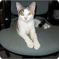 Adopt A Pet :: Sophie - Warminster, PA