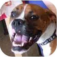 Adopt A Pet :: Simon - North Haven, CT
