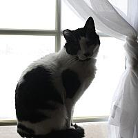 Adopt A Pet :: Moo - Rawlins, WY