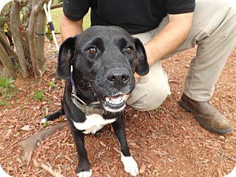 Hound (Unknown Type) Mix Dog for adoption in Thomaston, Georgia - Caprice