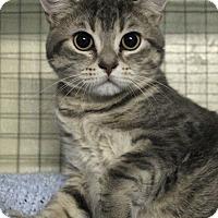 Adopt A Pet :: Hamburger - Mission, BC