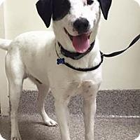 Adopt A Pet :: Timmy - Gainesville, FL