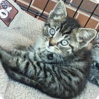 Adopt A Pet :: Owen - Horsham, PA