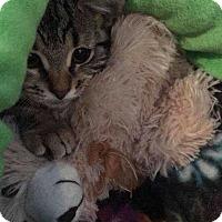 Adopt A Pet :: Bon Bon - Norwich, NY