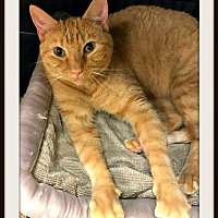 Adopt A Pet :: George - Overland Park, KS
