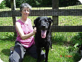 Labrador Retriever/Golden Retriever Mix Dog for adoption in Winfield, Pennsylvania - Jesse (Mariah)