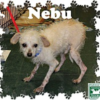 Adopt A Pet :: Nebu - Fallston, MD