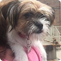 Adopt A Pet :: Quinn-Adopted! - Detroit, MI