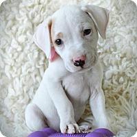 Adopt A Pet :: Gwinn - Kenner, LA