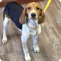 Adopt A Pet :: Brewster II - Tampa, FL