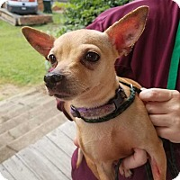 Adopt A Pet :: Lucy - Youngsville, NC