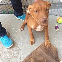 Adopt A Pet :: Hokey - Hohenwald, TN